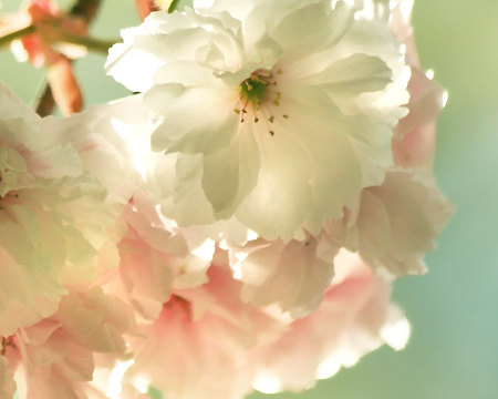 beauty from tumblr it�s spring timepetpanda blog