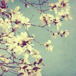 Beauty from Tumblr: Magnolia Blossom